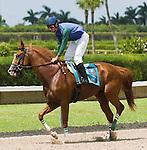 10 July 2010: Under Contract and Jockey Juan Leyva after the Bob Umphrey Turf Sprint Handicap at Calder Race Course in Miami Gardens, FL.