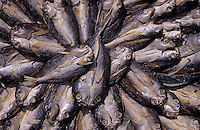 Asie/Malaisie/Bornéo/Sabah/Kota Kinabalu: Etal de poissons serrés sur le marche central