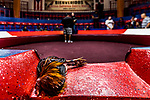 Cockfighting in Puerto Rico by Lorenzo Moscia