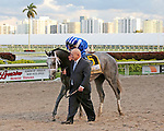 HALLANDALE BEACH, FL - FEBRUARY 27:   Mohaymen #6 with jockey Junior Alvarado on board wins the 74th running of the Fountain of Youth G2 Stakes at Gulfstream Park on February 27, 2016 in Hallandale Beach, Florida. (Photo by Liz Lamont)