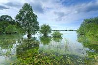 France, Aube (10), Champagne, Parc naturel régional de la Forêt d'Orient, lac d'Orient
