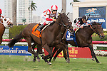January 24, 2015: #7 Consumer Credit (red and white cap) ridden by Edgard Zayas wins the Sweetest Chant (G3T) for 3 year old filles at Gulfstream Park. Gulfstream Park, Hallandale Beach (FL). Arron Haggart/ESW/CSM