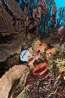 Seafan Reef Scenic<br /> Grenadines