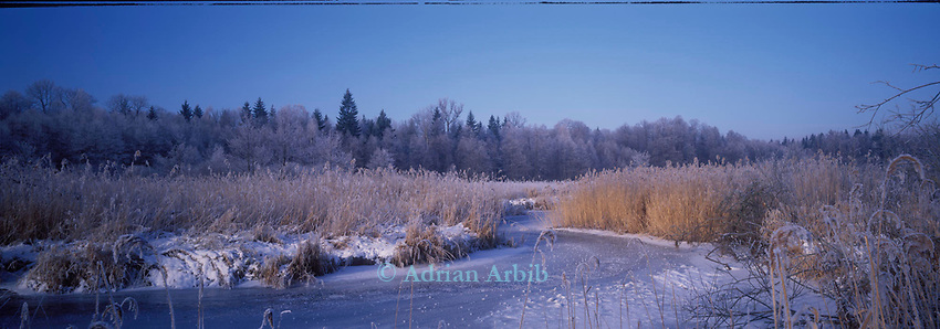 Marshland on the Narewka river after an overnight freeze, Bialowieza forest, Poland.<br /> This wild part of Poland is home to bison, wolves and bears.