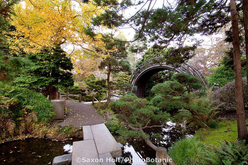 Japanese Tea Garden, Golden Gate Park, San Francisco. Drum Bridge