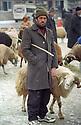 Turkey 2005 A man and his sheep at tne sheep market in Dogubayazit   Turquie 2005  Un homme avec son mouton au marché des moutons à Dogubayazit