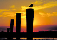Silhouette of sea bird