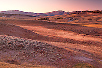 Meadows of Hayden Valley at sunset, Yellowstone National Park, Wyoming, USA