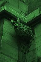 """Paris Left Bank: An ancient gargoyle of the roof of the church of Saint Séverin, in monochrome (Paris, 2010).<br /> <br /> Parigi """"Rive Gauche"""": Un'antica chimera del tetto della chiesa di Saint Severin, in monocromatico (Parigi, 2010)."""