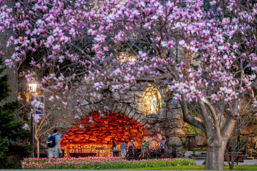 April 30, 2018; Grotto in Spring (Photo by Matt Cashore/University of Notre Dame)