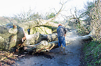 Saturday 10 January 2015<br /> Pictured: Tree management worker<br /> RE: Severe gales across Wales break in half a 100 year old beech tree from a garden falling across Penllwyn Lane in Graig-Y-Rhacca, Caerphilly, road closed.