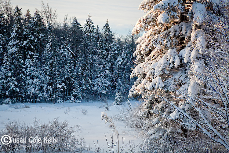 A winter morning in Woodford State Park, Woodford, VT, USA