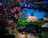 Tom Mackie, FLOWERS, photos, Le Rat Cottage, St. Lawrence, Jersey, Channel Isles, GBTM913532-1,#F# Garten, jardín