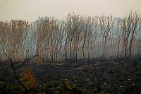 O Boletim de Monitoramento de Queimadas e Incêndios Florestais, do Instituto Nacional de Pesquisas Espaciais (Inpe), aponta que o estado do Pará apresentou grande concentração de focos de queimadas, distribuídas principalmente nas regiões nordeste e sudeste.FOTO: RAIMUNDO PACCÓ /