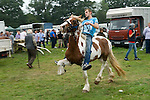 Barnet Gypsy Horse Fair Hertfordshire UK. Showing a horse.