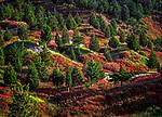 Italien, Toskana, Landschaft am Monte Amiata | Italy, Tuscany, landscape at Monte Amiata