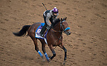 DEL MAR, CA - NOVEMBER 02: Battle of Midway, owned by Don Alberto Stable, & WinStar Farm, LLC and trained by Jerry Hollendorfer, exercises in preparation for the Breeders' Cup Las Vegas Dirt Mile at Del Mar Thoroughbred Club on November 2, 2017 in Del Mar, California. (Photo by Michael McInally/Eclipse Sportswire/Breeders Cup)