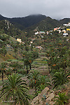 terrasses et villages deVallehermoso.Vallehermoso terraces and villages.groves of palm trees are a common feature of the heads of the valley on La Gomera.
