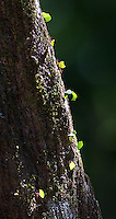 Leaf-cutter ants are always fascinating to watch.