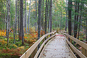 Pondicherry Wildlife Refuge - Boardwalk along the Mud Pond Trail in Jefferson, New Hampshire during the autumn months.