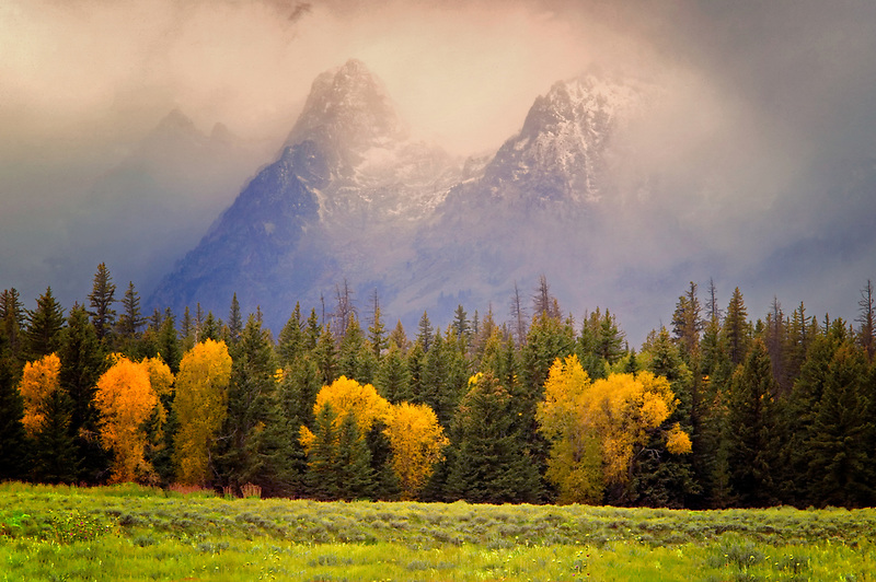 Cottonwood trees in fall color with storm and Teton Mountains. Teton National Park, Wyoming