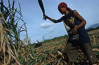 jbo70188 asia Philippines Negros agriculture biomass energy landless labourer people work on sugarcane sugar cane plantation hazienda.Asien Philippinen Negros Landwirtschaft landlose Landarbeiter bei Zuckerrohrernte Zucker Zuckerrohr Biomasse Bagasse Energie .copyright Joerg Boethling/agenda ph. ++49 40 39190714