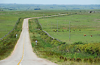 URUGUAY Tacuarembo, cattle on grazing land and road
