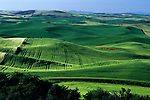 Rolling hills of green croplands from Steptoe Butte Eastern Washington State USA