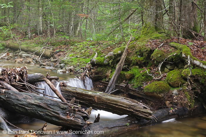 Remnants of a wooden bridge, near Ice Pond, along an old woods road that crossed Birch Island Brook, behind Camp 7, in Lincoln, New Hampshire  of the East Branch & Lincoln Railroad (1893-1948).
