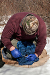 New Hampshire Fish and Game Biological Technician, Brett Ferry collects an ear clipping from a New England cottontail rabbit inside the Great Bay National Wildlife Refuge, vertical.