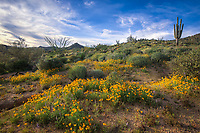 Sonoran Spring - Arizona