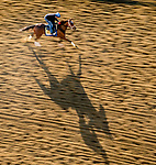 May 13, 2021: Adventuring exercises for the Black-Eyed Susan Stakes at Pimlico Race Course in Baltimore, Maryland. Scott Serio/Eclipse Sportswire/CSM