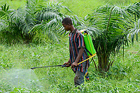 TOGO, Tohoun, village ADJIKAME, farmer spray Herbicide Glyphosate a round-up weed killer, made in china by RAINBOWCHEM,  without protective mask and clothes, in bean and oil palm filed