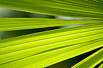 Europa, DEU, Deutschland, Nordrhein Westfalen, NRW, Ruhrgebiet, Bochum, Ruhr-Uni, Botanischer Garten, Pflanze, Detailaufnahmen, Kategorien und Themen, Natur, Umwelt, Pflanzen, Pflanzenkunde, Botanik, Biologie, <br /> <br /> [Fuer die Nutzung gelten die jeweils gueltigen Allgemeinen Liefer-und Geschaeftsbedingungen. Nutzung nur gegen Verwendungsmeldung und Nachweis. Download der AGB unter http://www.image-box.com oder werden auf Anfrage zugesendet. Freigabe ist vorher erforderlich. Jede Nutzung des Fotos ist honorarpflichtig gemaess derzeit gueltiger MFM Liste - Kontakt, Uwe Schmid-Fotografie, Duisburg, Tel. (+49).2065.677997, <br /> archiv@image-box.com, www.image-box.com]