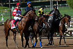 """ARCADIA, CA. SEPTEMBER 29:  #1 Rowayton, ridden by Florent Geroux, in the post parade of the American Pharoah Stakes (Grade l) """"Win and You're In Breeders' Cup Juvenile Division"""" on September 29, 2018 at Santa Anita Park in Arcadia, CA. (Photo by Casey Phillips/Eclipse Sportswire/CSM)"""