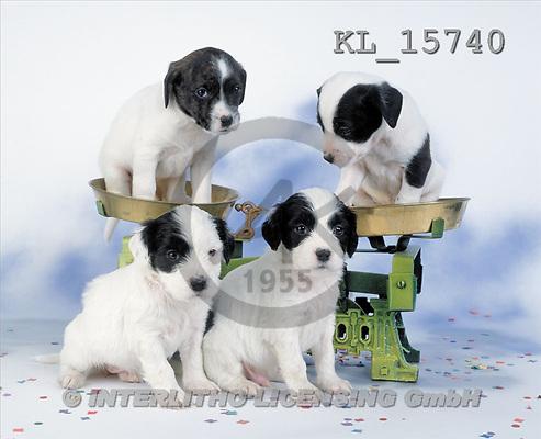 Interlitho, Alberto, ANIMALS, dogs, photos, 4 dogs, scales(KL15740,#A#) Hunde, perros