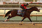 Switch, trained by John Sadler and to be ridden by Joel Rosario , exercises in preparation for the 2011 Breeders' Cup at Churchill Downs on October30, 2011.