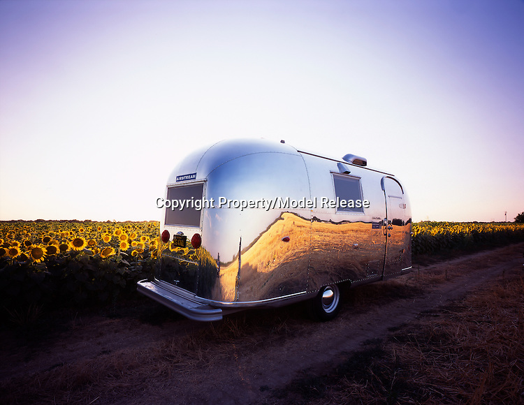 1964 Airstream Globe Trotter sitting next to a field of sunflowers.