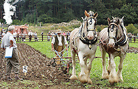 Horse ploughing with Shire Horses, Beamish ploughing match, County Durham.
