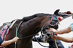 June 9, 2012. The blinkers come off of Reflecting after race 2 on Belmont Stakes Day, a one-mile contest for maidens three years old and upward at Belmont Park in Elmont, New York. The winner was Love to Run. ©Joan Fairman Kanes/Eclipsesportswire