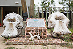 Reserva dos Elefantes