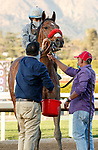 ARCADIA, CA  MARCH 6: #6 Idol, ridden by Joel Rosario, returns to the connections after winning the Santa Anita Handicap (Grade l) on March 6, 2021 at Santa Anita Park in Arcadia, CA.   (Photo by Casey Phillips/EclipseSportswire/CSM)