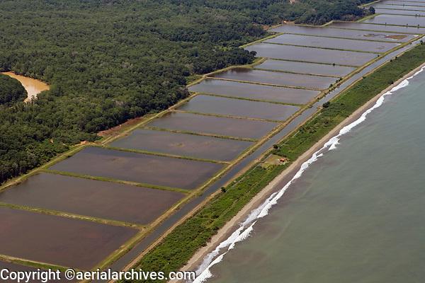 aerial photograph of shrimp farming at the Pacific coast, Panama | fotografía aérea de la cría de camarones en la costa del Pacífico, Panamá