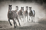 Horses and Dust