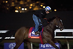 DEL MAR, CA - NOVEMBER 01: Cambodia, owned by Winter Quarter Farm and trained by Thomas F. Proctor, exercises in preparation for Breeders' Cup Filly & Mare Turf during morning workouts at Del Mar Thoroughbred Club on November 1, 2017 in Del Mar, California. (Photo by Michael McInally/Eclipse Sportswire/Breeders Cup)