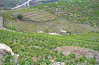 Terraced vineyards in Collioure with a small vineyard hut and the new motorway in the background, Languedoc-Roussillon, France