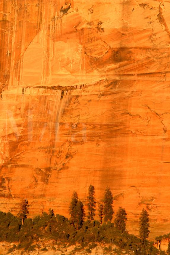 Trees up against orange Canyon wall, Zion National Park, Washington County, U