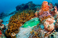 Plastic bottles litter the ocean bottom on a coral reef in Palm Beach, Florida, USA, Atlantic Ocean