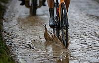 splashy edition<br /> <br /> 118th Paris-Roubaix 2021 (1.UWT)<br /> One day race from Compiègne to Roubaix (FRA) (257.7km)<br /> <br /> ©kramon