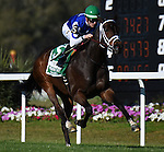 OLDSMAR, FLORIDA - FEBRUARY 13: Tepin  #5, ridden by jockey Julien Leparoux, wins the Lambholm South Endeavour Stakes at Tampa Bay Downs on February 13, 2016 in Oldsmar, Florida (photo by Doug DeFelice/Eclipse Sportswire/Getty Images)
